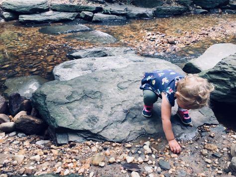 Babbling brooks and free range turtles